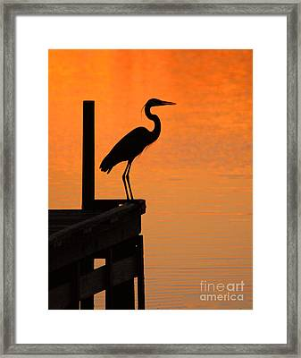 Heron At Sunset Framed Print by Clayton Bruster