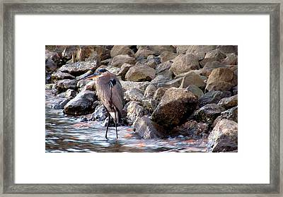 Heron At Sunset Framed Print by Nicole I Hamilton