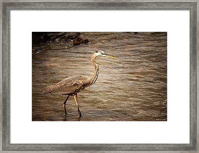 Heron At The Lake Framed Print by Greg Simmons