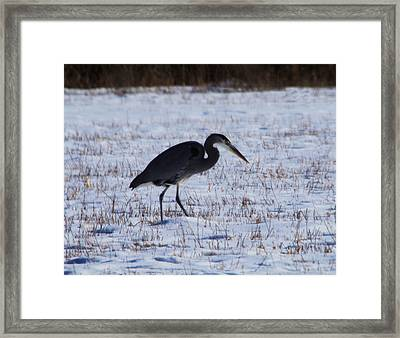 Heron At The Ready Framed Print by Jeff Swan