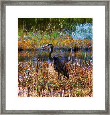 Heron Blue Framed Print