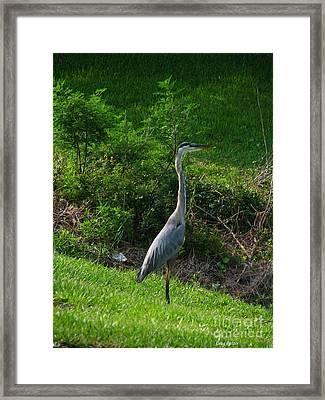 Heron Blue Framed Print by Greg Patzer
