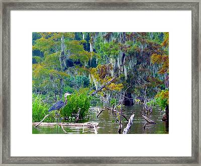 Heron Blues Framed Print by Rdr Creative