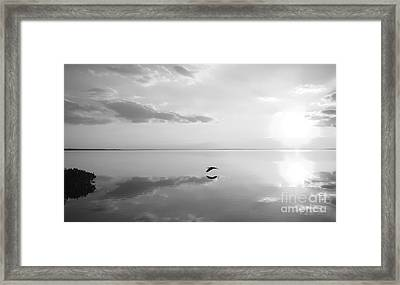 Heron Crossing Framed Print by Jack Norton