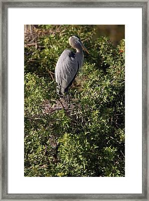 Heron Guard Framed Print by David Yunker