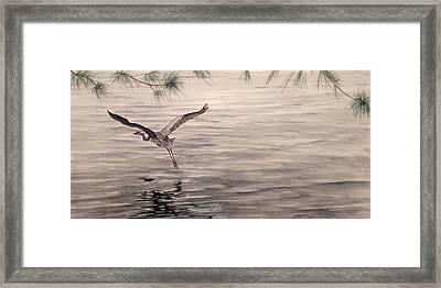 Heron In Flight Framed Print by Debbie Homewood