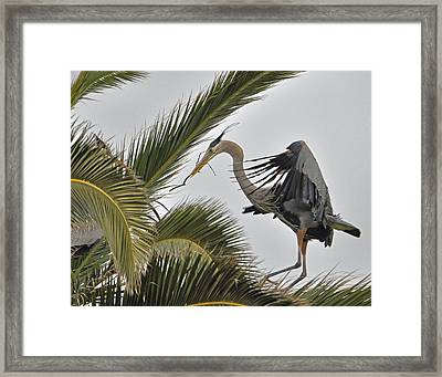 Heron In The Palm Framed Print