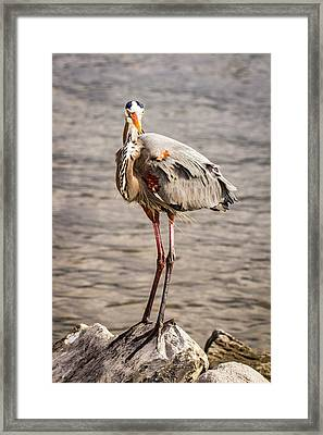 Heron Indignation Framed Print by Jean Noren