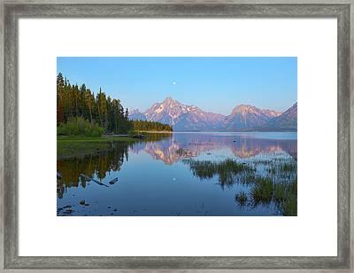Heron On Jackson Lake Framed Print