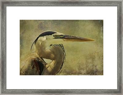Heron On Texture Framed Print by Deborah Benoit