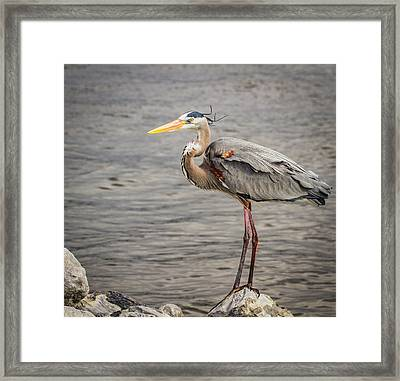 Heron On The Lookout Framed Print by Jean Noren