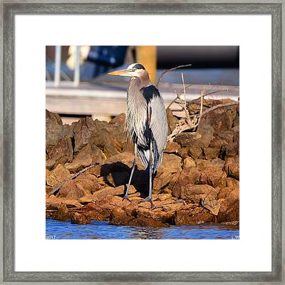 Heron On The Rocks Framed Print