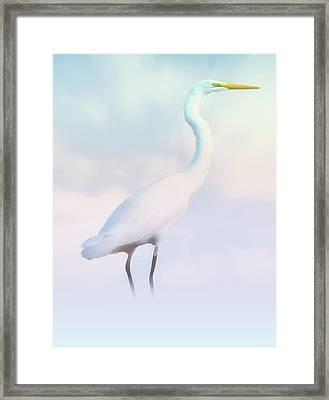 Heron Or Egret Stance Framed Print by Joseph Hollingsworth
