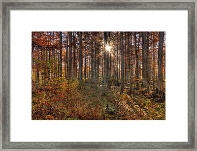 Heron Pond Cypress Trees Framed Print by Steve Gadomski