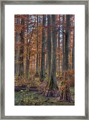 Heron Pond Dawn Framed Print by Steve Gadomski