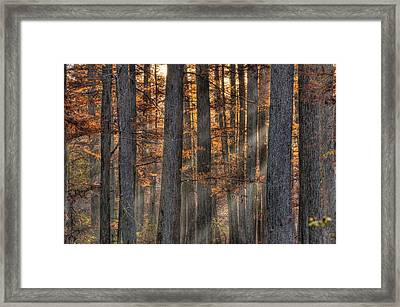Heron Pond Morning Mist Framed Print by Steve Gadomski