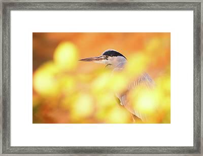 Hidden Heron Framed Print