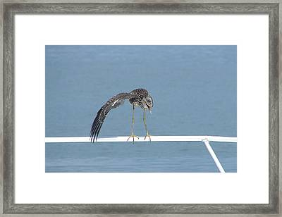 Heron Stretching Framed Print by Bruce W Krucke