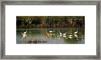 Heron Sunrise Framed Print