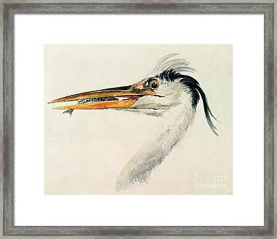 Heron With A Fish Framed Print