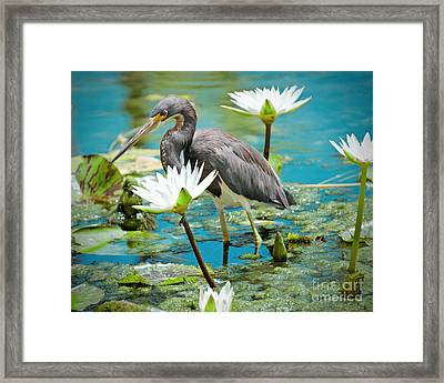 Heron With Water Lillies Framed Print