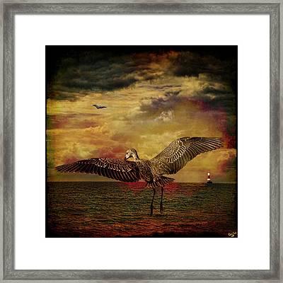 Herons Framed Print by Chris Lord