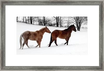 Hestar I Snjo Framed Print by Scot Johnson