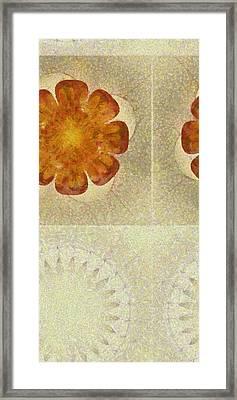 Heteroside Distribution Flower  Id 16164-210800-46150 Framed Print by S Lurk