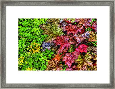 Heuchera And Sedum Framed Print