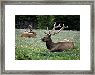 Hey Check This Rack Out Framed Print