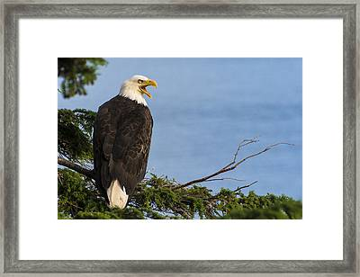 Framed Print featuring the photograph Hey by Gary Lengyel