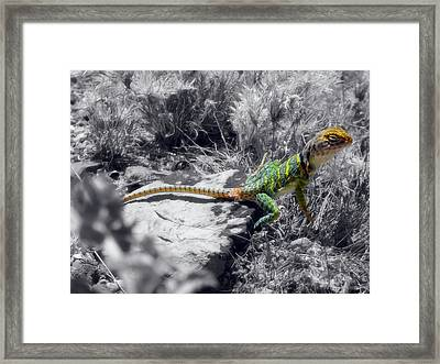 Hey, I'm Posing Here Framed Print