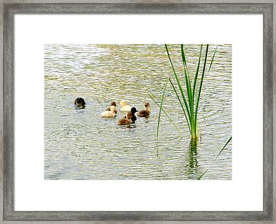 Hey My Feet Look Funny Framed Print by DiDi Higginbotham