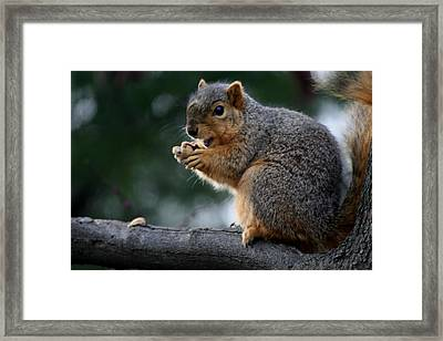 Hey  The Guy With Peanuts Framed Print by Martin Morehead
