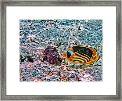 Hey. Underwater World. Framed Print by Andy Za