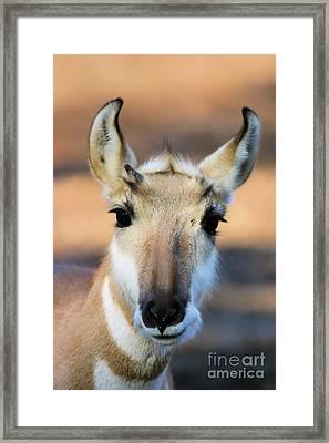 Hey You Framed Print by Karol Livote