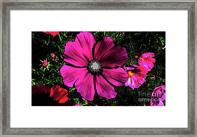 Hi Con Pink Flower Framed Print by Alan M Thwaites