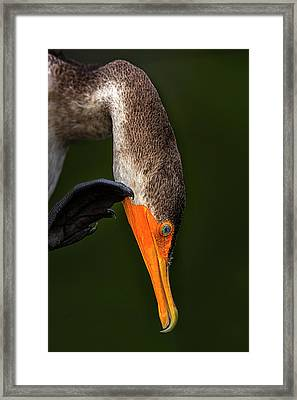 Hi... Framed Print