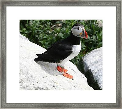 Framed Print featuring the photograph Hi There by Carol Kinkead