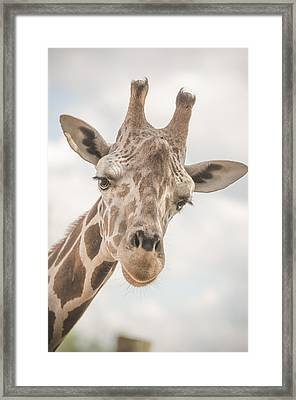 Hi There, I'm A Giraffe Framed Print by David Collins