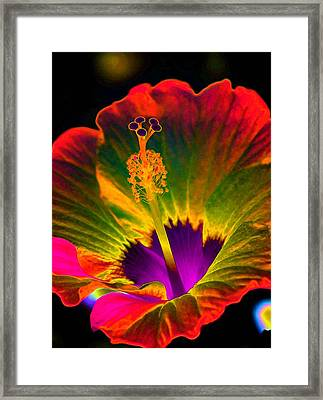 Hibiscus 01 - Summer's End - Photopower 3189 Framed Print by Pamela Critchlow