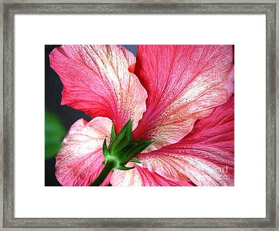 Hibiscus #5 Framed Print