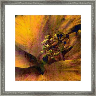 Hibiscus Framed Print by Barbara Berney
