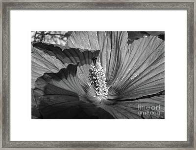 Hibiscus Black And White Framed Print