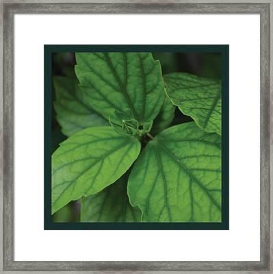 Hibiscus Bud 2 Framed Print