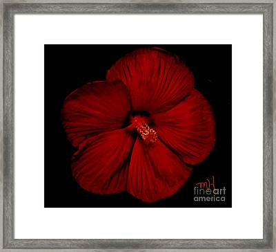 Hibiscus By Moonlight Framed Print by Marsha Heiken