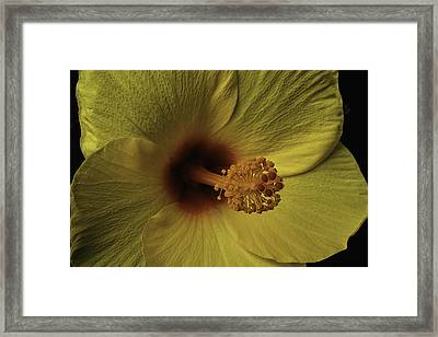 Hibiscus Close Up Framed Print by Garry Gay