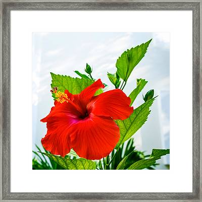 Hibiscus Closeup Framed Print