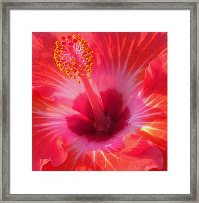Framed Print featuring the photograph Hibiscus - Coral And Pink Square by Kerri Ligatich