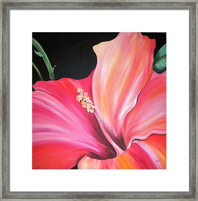 Hibiscus Framed Print by Debi Starr